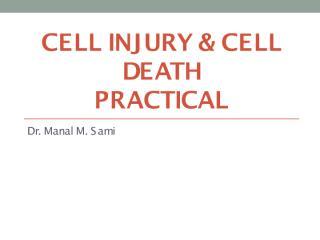 Cell injury, practical.pdf